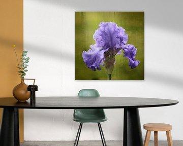 flower in blue van Yvonne Blokland