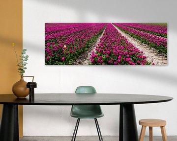 Tulpen in Flevoland von René Holtslag