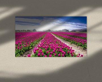 Tulpenveld in Flevoland von René Holtslag