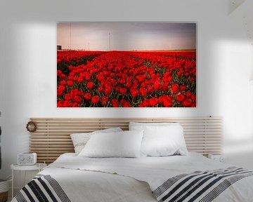 Tulpen in Holland von René Holtslag