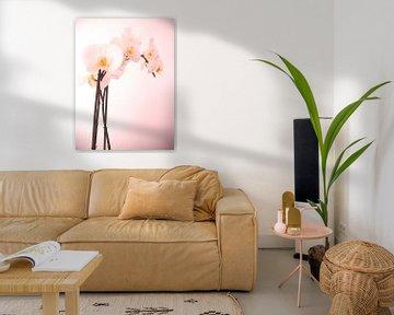 Orchidee von Desiree Barents