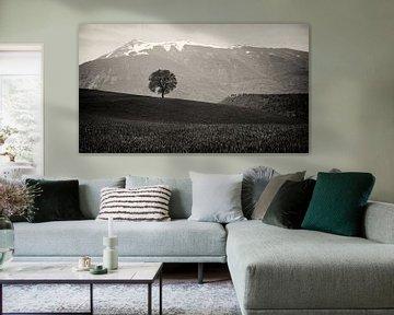 Eenzame boom van Vincent van Kooten