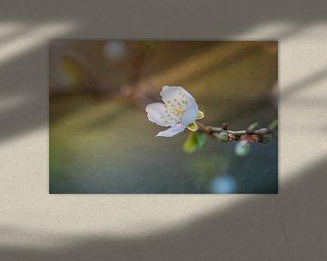 Blüte sehnt sich nach Sonnenlicht von Arja Schrijver Fotografie