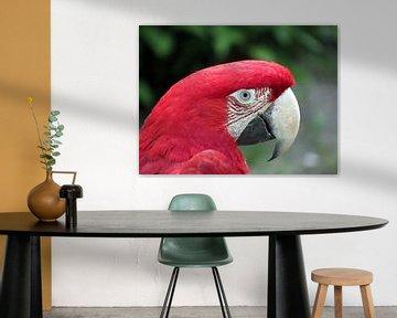 Papegaai von richard de bruyn