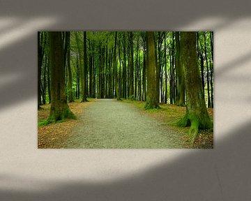 Waldweg im Mai von Ostsee Bilder