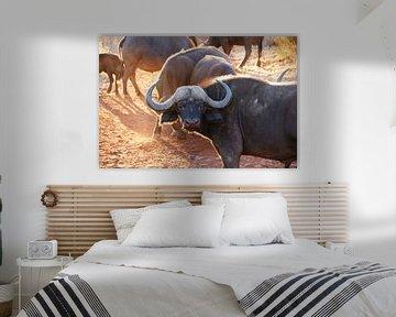 Buffel van Chris Gottenbos