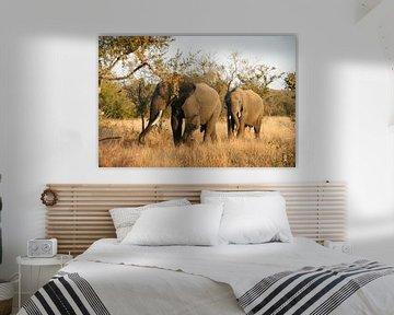 Olifanten van Chris Gottenbos