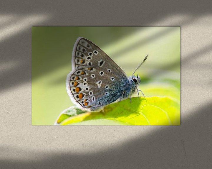 Sfeerimpressie: Icarusblauwtje vlinder op groen blad van Mark Scheper