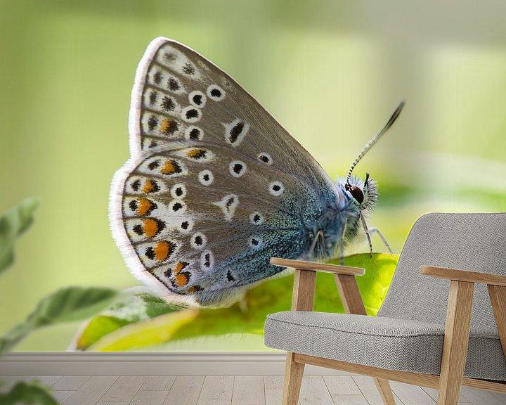 Sfeerimpressie behang: Icarusblauwtje vlinder op groen blad van Mark Scheper