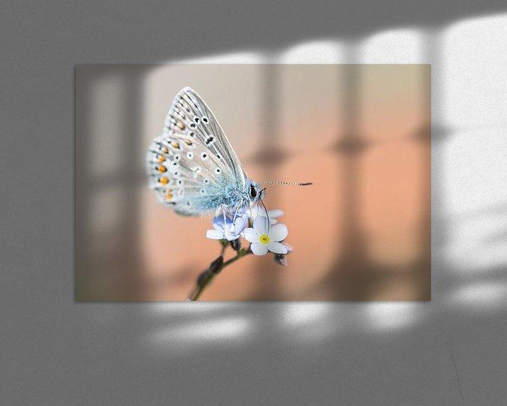 Sfeerimpressie: Icarusblauwtje vlinder op blauwe bloem van Mark Scheper