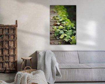 evergreen van Meleah Fotografie