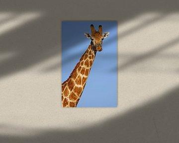 The Giraffe - Africa wildlife van W. Woyke