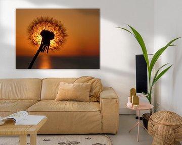 Pusteblume vor der untergehenden Sonne von Rico Ködder