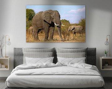 Elefanten - Afrika wildlife  von W. Woyke
