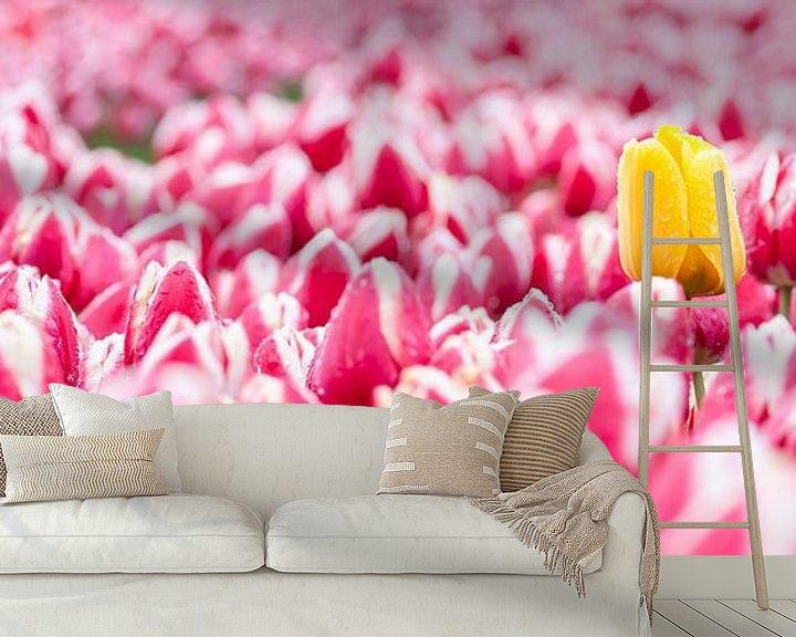 Beispiel fototapete: Gele tulp tussen roze tulpen panorama von Fotografie Egmond