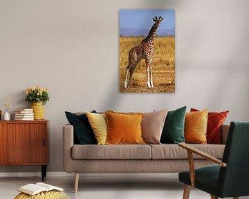 Young Giraffe - Africa wildlife van W. Woyke