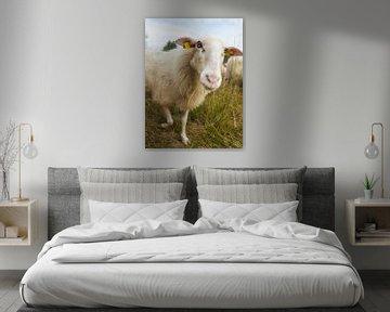 Neugieriges Schaf von Karin School-van Leur