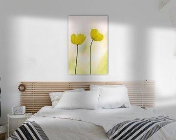 Papaver ( gele bloem) van Cocky Anderson