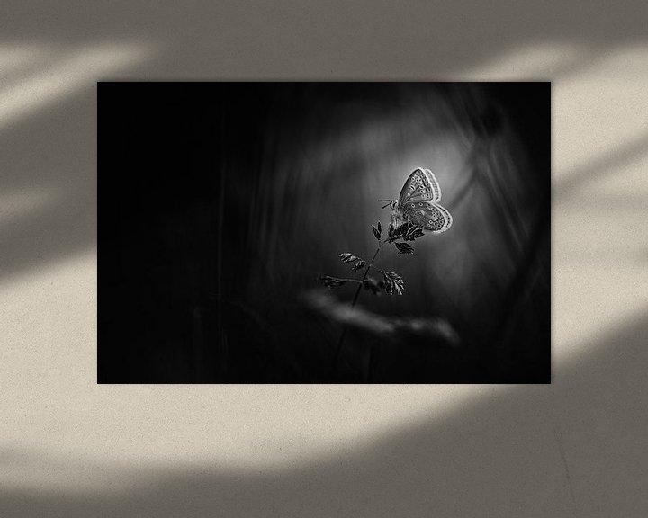 Sfeerimpressie: Amazing Beauty van Bob Daalder