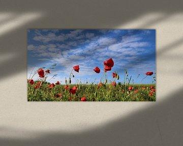Mohnblumen im Wind von Ostsee Bilder