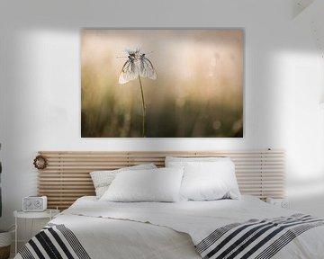 Twee witte vlinders in de eerste zonnestralen van Judith Borremans