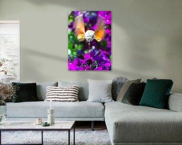 Honingdrinkende kolibrievlinder  van Kees Martijn Nix