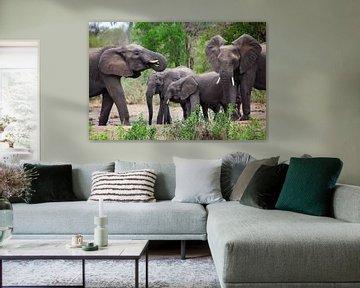 Elefanten in Südafrika, Krügerpark von Hans Kluppel