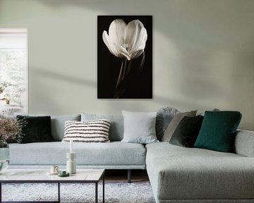 White beauty van LHJB Photography