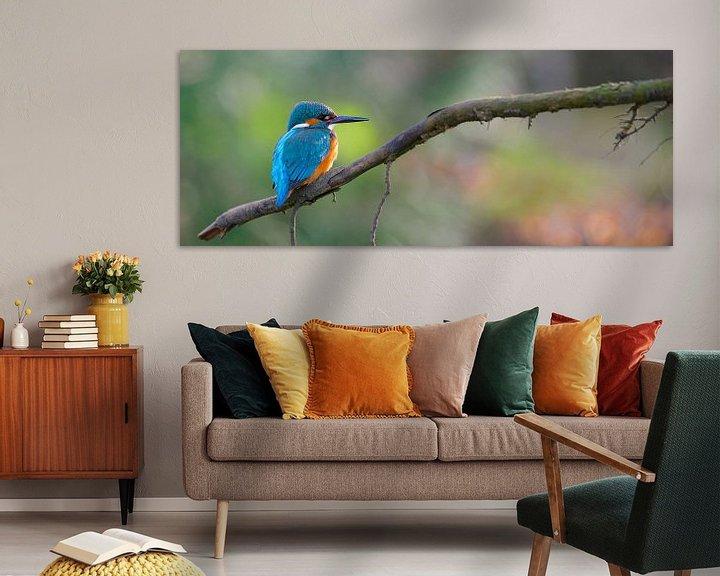 Beispiel: Eisvogel panorama von IJsvogels.nl - Corné van Oosterhout
