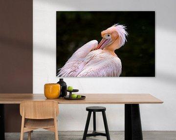 Roze pelikaan doet veren goed. sur Michar Peppenster