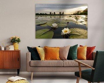 Waterlelies tijdens zonsondergang von Sjoerd van der Wal