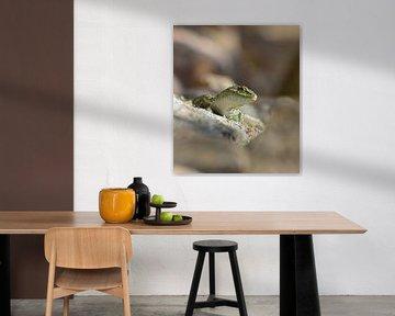 Salamander von Eveline Lenderink