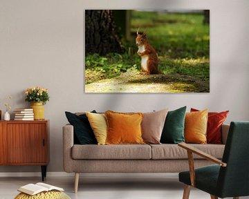 Ein rotes Eichhörnchen steht hoch aufgerichtet von Yven Dienst