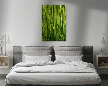 Gras van Gabi Siebenhühner