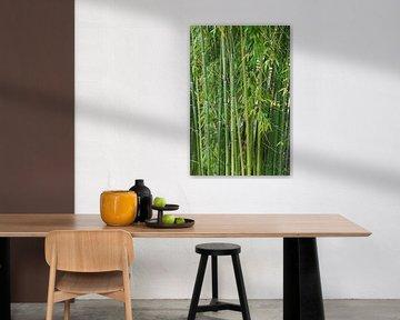 Bambus van Gabi Siebenhühner