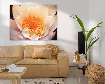 Roze waterlely van Nannie van der Wal