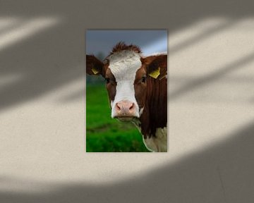 Cow are you doing? von Corina de Kiviet