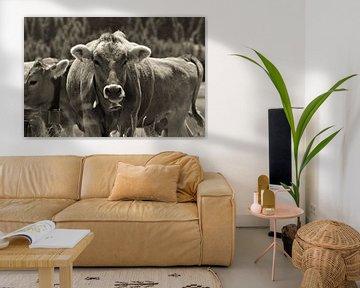 Milka koe van Martin Van der Pluym