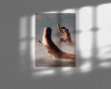 Baumstämme im Wasser von Jörg Hausmann
