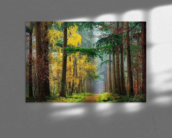 Sfeerimpressie: Kleuren van het Bos van Lars van de Goor