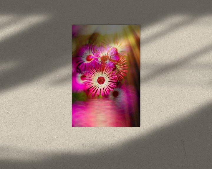 Sfeerimpressie: Sonnenanbeter pink van Dagmar Marina