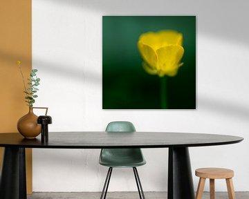 Abstracte gele bosboterbloem von Tonko Oosterink
