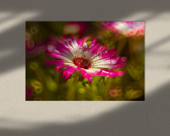 Sfeerimpressie: Sonnenanbeter pinkmagic van Dagmar Marina