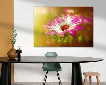 Sonnenanbeter rosamagic van Dagmar Marina
