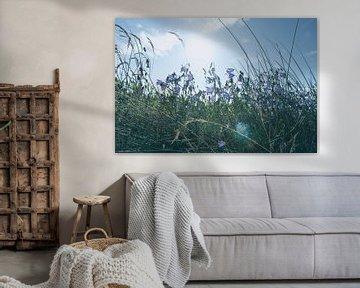 Summer Meadow van Jörg Hausmann