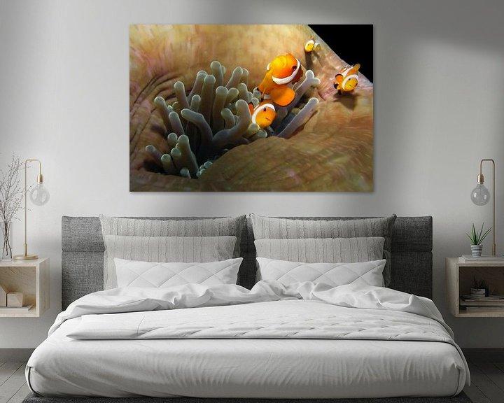 Sfeerimpressie: Anemonefish van Benno Neeleman