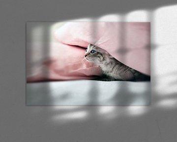 Junge Katze versteckt unter rosafarben Kissen sur Christa Thieme-Krus