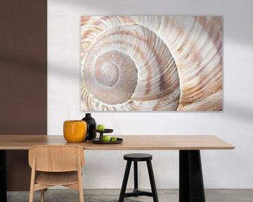 Shell spiral van Willem Havenaar