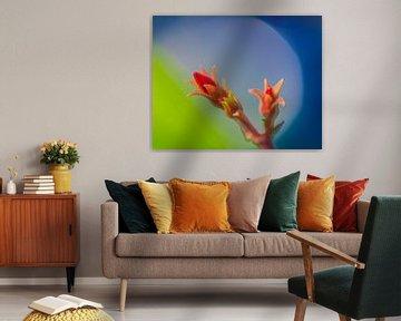 Oleander von Harrie Muis