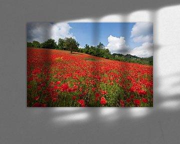 Poppy field van Willem Havenaar
